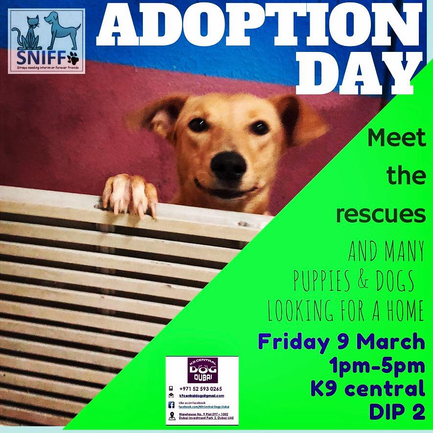 SNIFF - Join us at Adoption Day every Friday 1-5pm at K9 Central! @ K9 Central