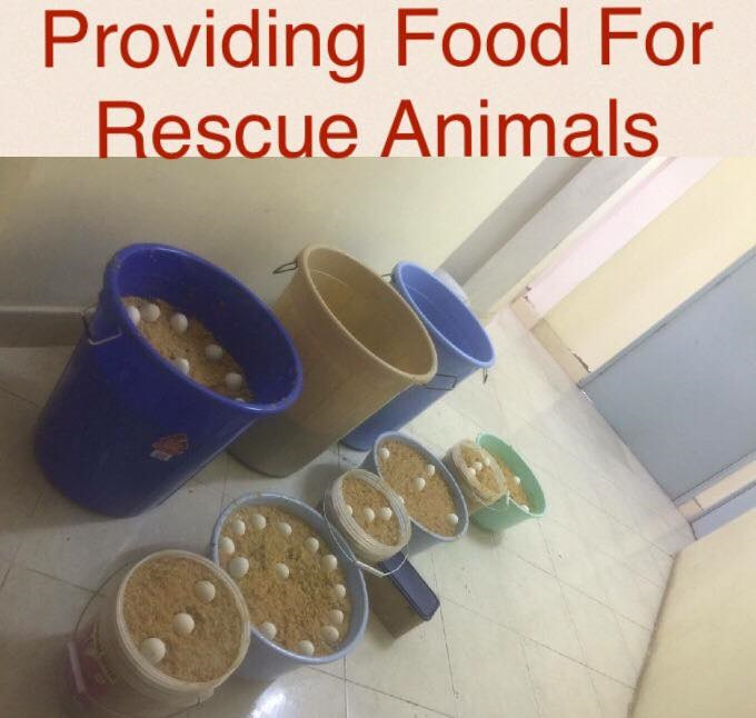 Providing food to rescue animals - share your love of cooking and help dogs and cats in need of a nutritious meal!