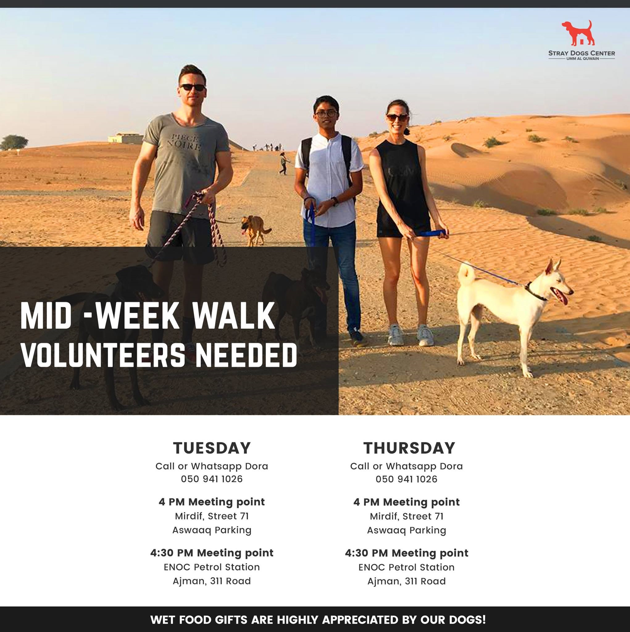 Stray Dogs Center - join the mid week walks and cuddles! @ Stray Dogs Center UAQ