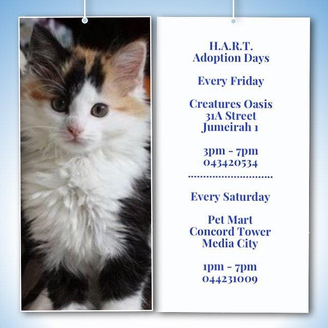 HART - Adoption Day at Creatures Oasis every Friday! @ Creatures Oasis